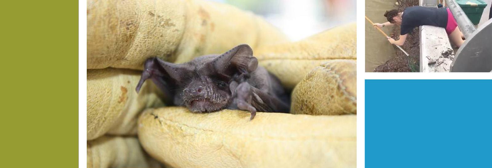 Houston Bat Rescue